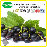 Hot sales GMP 25% anthocyanidin black currant extract/Ribes nigrum extract