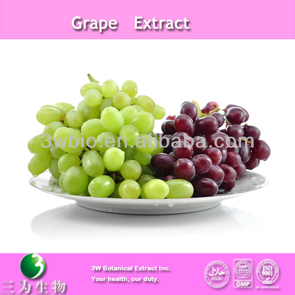 High quality grape seed polyphenols extract