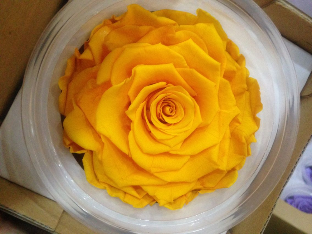 Stainless High Quality preserved Roses 2016 Kunming preserved Flowers preserved Roses Wholesale Price rose for banquets