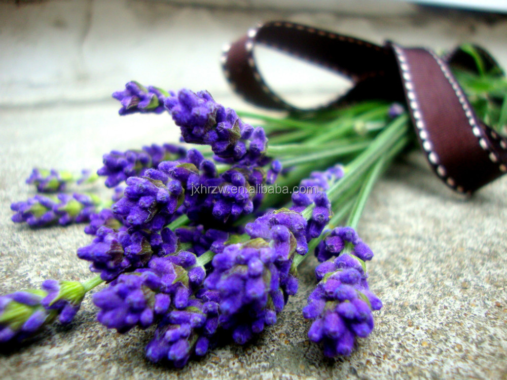 From Healing Solutions Anise lavender herbal tea Skype id:zhongping7272