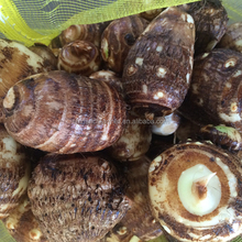 2017 Latest Natural Vegetation Big Fresh Taro For Sale