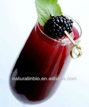 100% Natural Blueberry P.E. for Food Additive