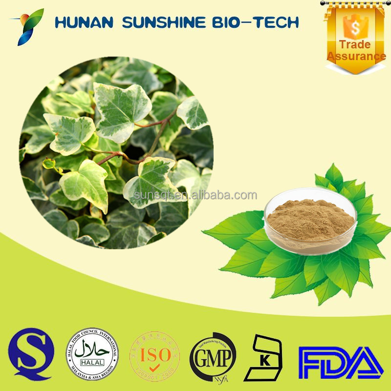 Plant Extract Ivy Leaf Extract / Hedera Helix Extract Powder for anti-inflammatory & Reducing phlegm & cough