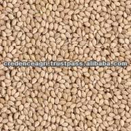Indian Natural Sesame Seeds Prices