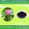 Natural Red Clover Extract 20% Isoflavones