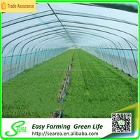 Hor sale agricultural greenhouse low cost greenhouse for vegetable