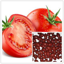 100% Pure Natural Lycopene Softgels For Preventing Cancer GMP Certified