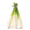 New Vegetable Products Water Bamboo Price