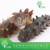 Factory supplier top quality 30% Polysaccharide Sea Cucumber Extract Powder
