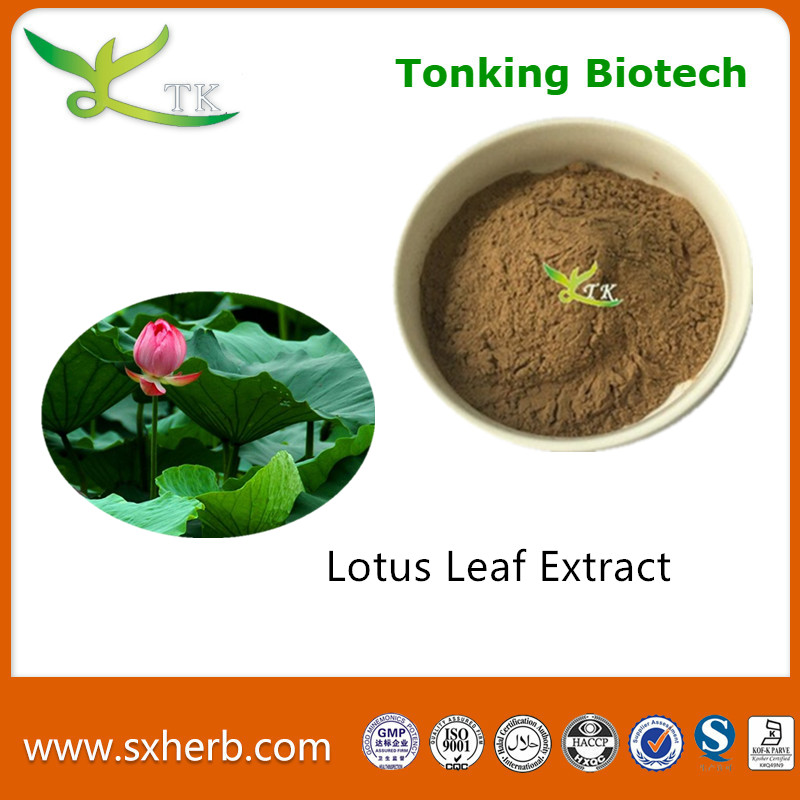 Weight loss product natural plant extraction lotus leaf extract