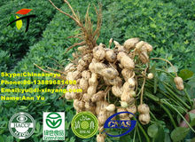 wholesale peanut price