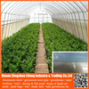 Cheap Plastic Agricultural Greenhouse With 3