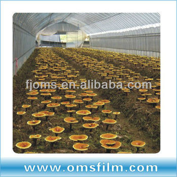 plastic tunnel for mushroom production