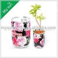 Tin can flower pot planting with impatiens seeds,garden decoration items,flower in a can.