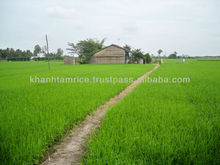 VIETNAM BRAND NAME FOR RICE - KHANH TAM RICE FACTORY