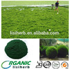 100% Natural organic chlorella / liquid chlorella /chlorella vulgaris