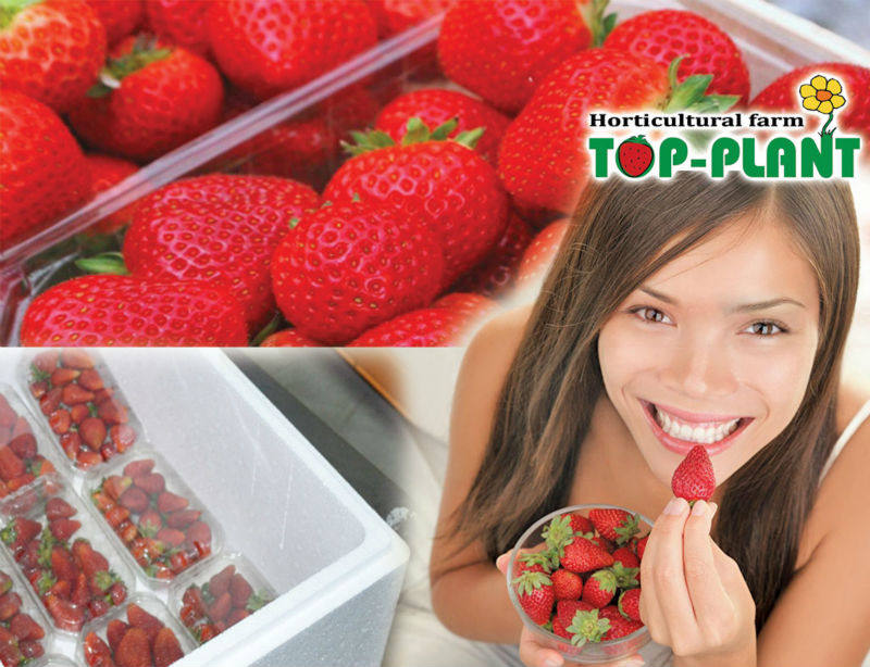 FRESH STRAWBERRY, best quality fruits