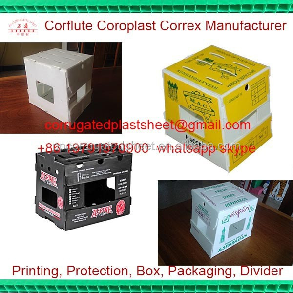 foldable pp plastic asparagus packing boxes