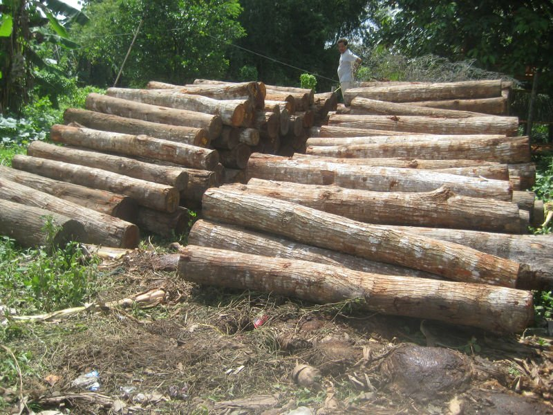forest products, Mahogany roundlogs