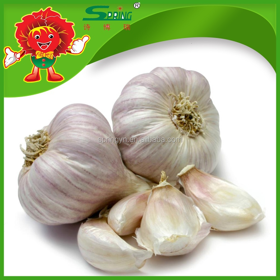 organic white garlic on sale for cooking