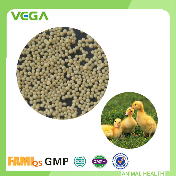 Utility Bacillus Licheniformis Probiotic Bacillus Clausii For Animal Feed