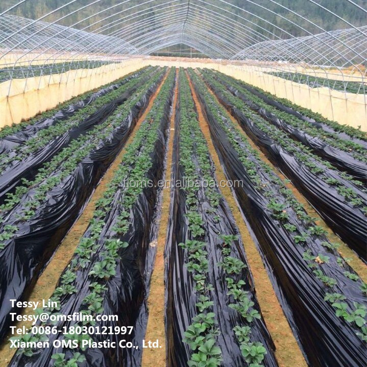 Agricultural black plastic mulch