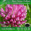 Natural Free Sample Red Clover Extract Trifolium Pratense L.