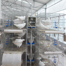 Good quality cage pour pigeon for standard sale