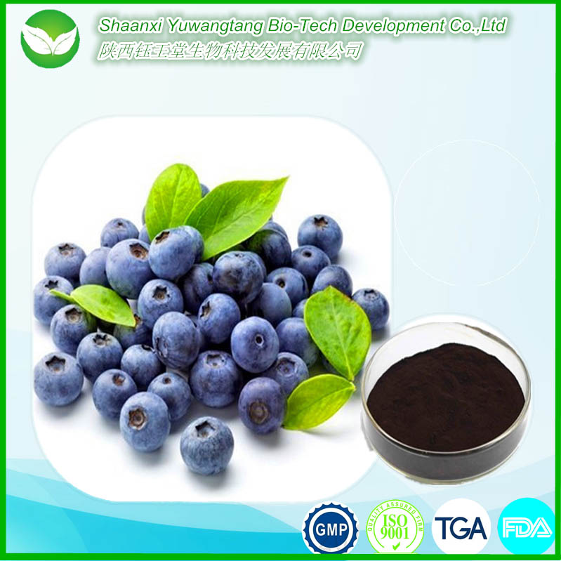Hot sale Chinese herb Cure the ocular disease natural organic Bilberry extract
