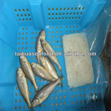 silver seafood with quality whiting frozen fish