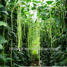 factory supplying sour cowpea