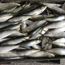 Cheap seafood Chinese fresh frozen sardine