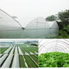 30gsm 0 6m 50m Agriculture With