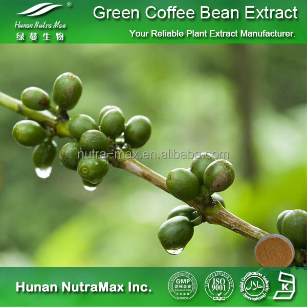 ISO GMP Approved 100% Natural Green Coffee Bean Extract,Pure Green Coffee Bean Extract