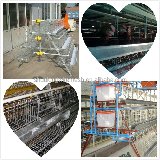 broiler used chicken cage for sale Competitive Prices ISO certification