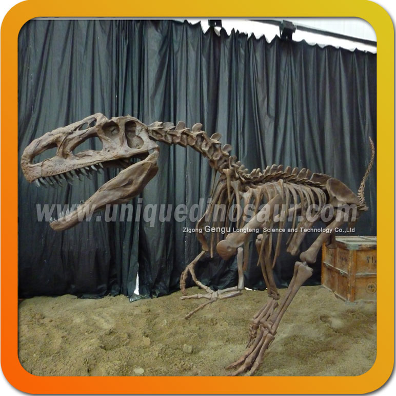 Dinosaur skeleton decoration life size dinosaur bones