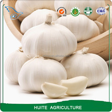 Natural Fresh Normal White Garlic