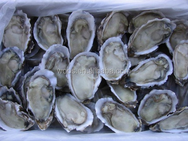 hight quailty frozen half shell oyster