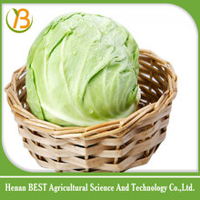 wholesale cabbage/product specification for cabbage/price of green cabbage