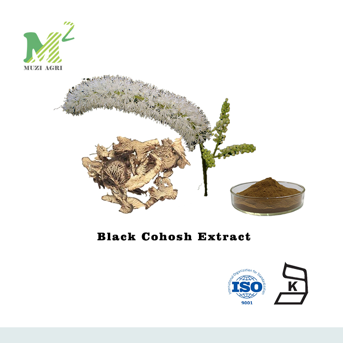 Active Ingredients 8% Triterpenoid Saponins Black Cohosh Extract/Cimicifuga Foetida L.extract