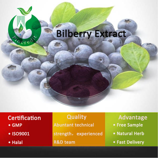 Hot Selling Bilberry Powder Frozen Fresh Bilberry Plant For Sale