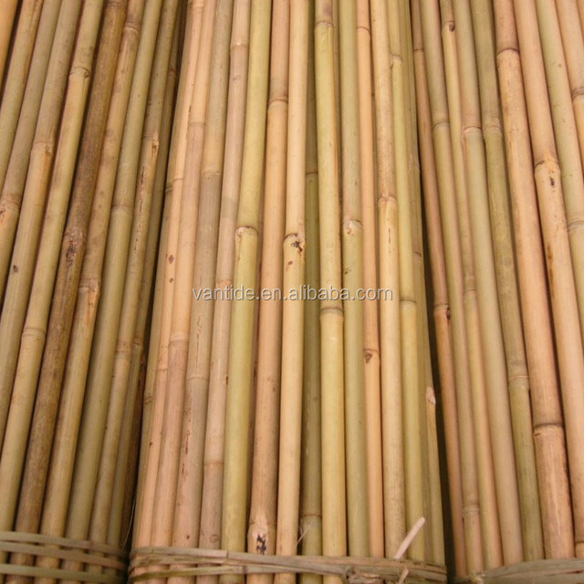 Green Strong Raw Bamboo Poles/ Agricultural Product