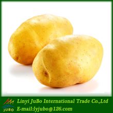 Chinese fresh russet potato sale in karachi at cheap rate
