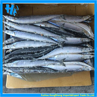 Frozen pacific saury fish for sale