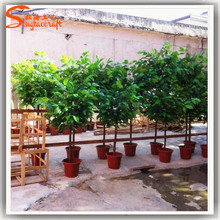 ST-CO10 artificial cocoa trees plastic cocoa beans tree real wood trunk cocoa plant