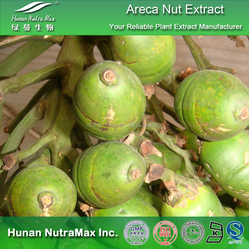 Top Quality Areca Nut Powder Extract,Areca Nut P.E.4:1 5:1 10:1 20:1
