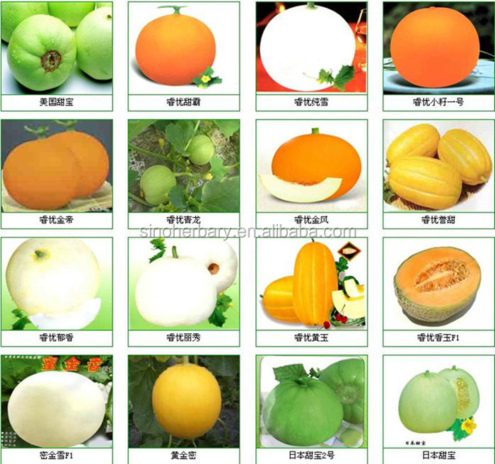 2017 Newest hybrid fruit seed sweet melon seeds for growing