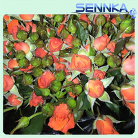 2016 A Quality Wholesale Fresh Cut Flowers With 20stems/Bundle Fresh Cut Flowers Colombia Molti-Colo