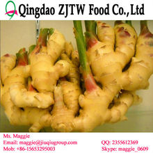 Ginger buyers and price in China