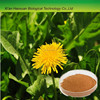 Organic natural Dandelion Extract, Flavone 4%,10%,20%,10:1,20:1